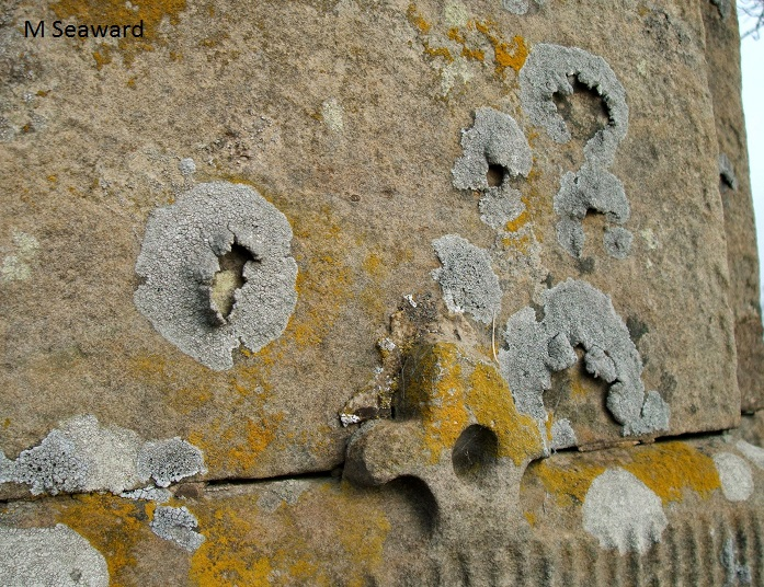 lichens in churchyards